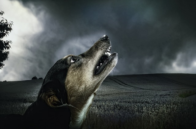 evil scared dog in storm clouds creepypasta grim